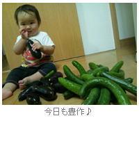 デジタコ&物流情報システム開発のフルバック@夏野菜をたくさん食べる!